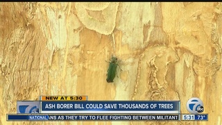 Federal bill to fight Emerald Ash Borers in WNY