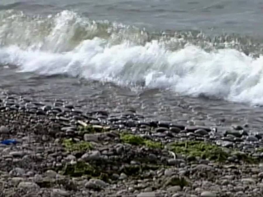 olcott beach unsafe for swimming