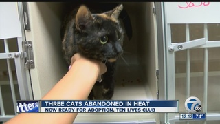 3 cats abandoned in heat, ready for new homes