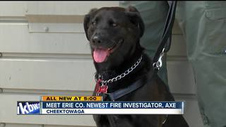 Meet Erie County's newest fire investigator, Axe