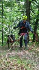 Drone, rope skills used to rescue lost dog