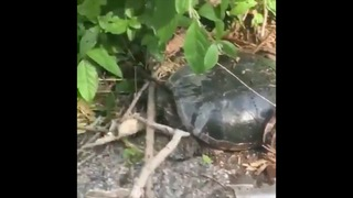 Teen facing charges in turtle attack incident