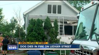 Dog dies in early morning North Buffalo fire