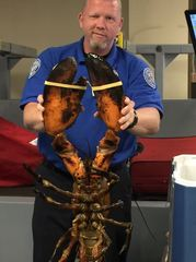 Large lobster found in luggage at Boston airport