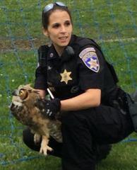 Deputy saves owl entangled in soccer net