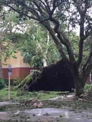 WNY native near Orlando shares Irma damage pics