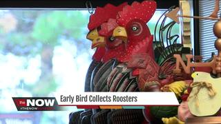 Early bird collects roosters