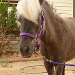 Mini horses trot into ECMC