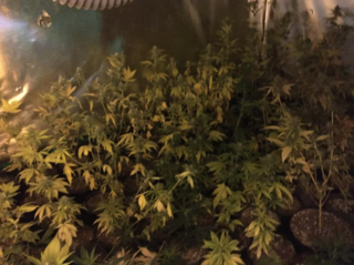 Grow operation found in secret garage room