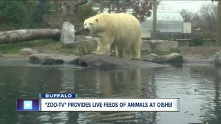 Children's hospital has live feeds from zoo
