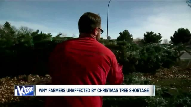 Why you could get a better deal on locally-grown Christmas trees this year