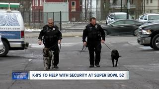 Local dogs score tickets to the Super Bowl