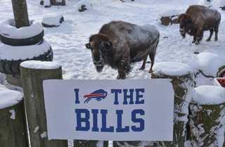Buffalo Zoo: Bring on the Jags!