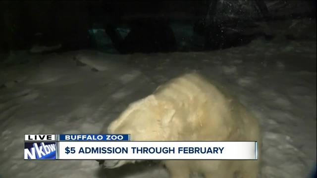 -5 Polar Bear days at the Buffalo Zoo