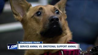 Delta to tighten rules on emotional support dogs