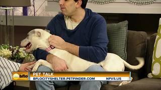 Pet Talk Tuesday Cardi B