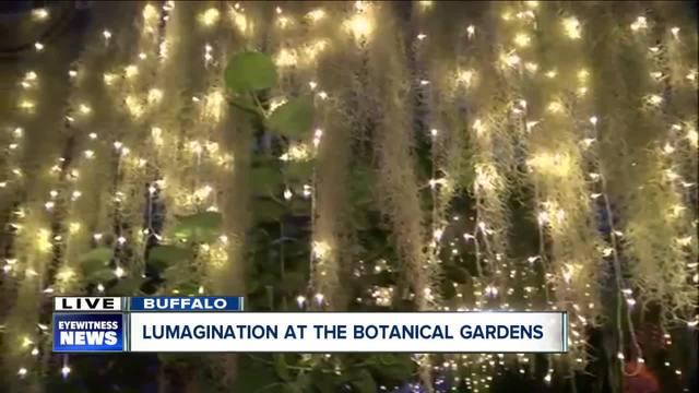 Wonderful Lumagination Lights Up Buffalo U0026 Erie County Botanical Gardens   WKBW.com  Buffalo, NY