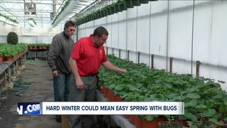 Bugged by winter? There could be a benefit
