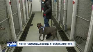 NT considers cap on dog ownership