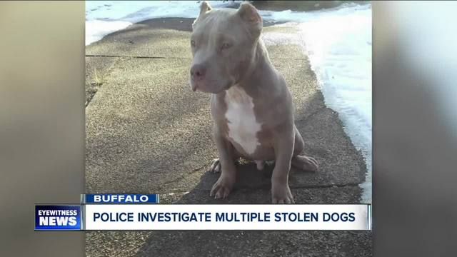 Family searches for dog stolen from their yard