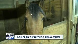 Horse therapy program helps people of all ages