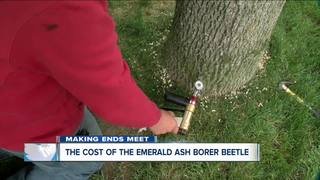How to save your ash trees