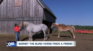Meet Barney the blind horse and his best friend