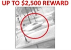 Reward offered for info on Buffalo hit and run