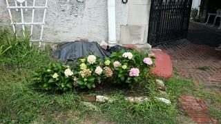Flowers stolen from Elmwood Village yard found