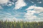 Will it rain at the Eden Corn Festival