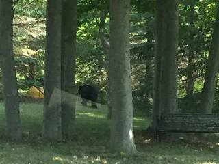 Roaming bear spotted in Lancaster
