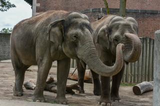 Buffalo Zoo losing both Asian elephants