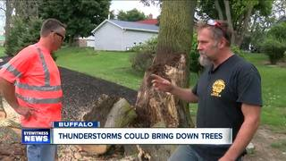 Thunderstorms could bring down trees across WNY