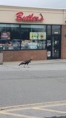 Tonawanda Turkey Watch: There's a Facebook page