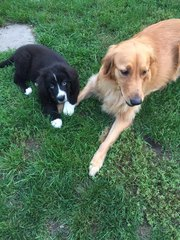 Lepto scare for dogs in Kenmore area