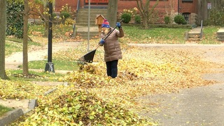 What to do with all those leaves in your yard