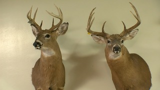 Safety urged as hunters gear up for opening day