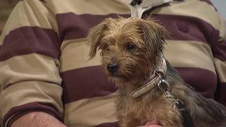 Pet Talk Winter Pet Care