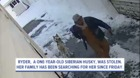 Security camera catches dognapper in the act